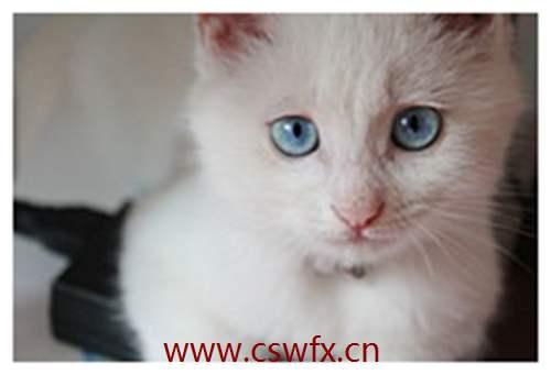 描写猫的眼睛的句子 句子大全 第2张