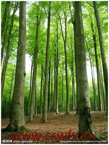 描写树林景色的句子 句子大全 第2张