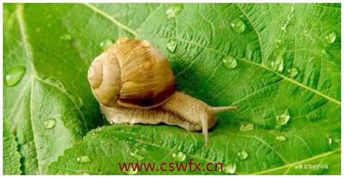 描写蜗牛精神的句子 句子大全 第2张