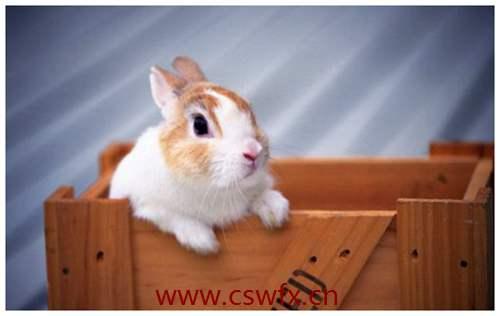 描写兔子的唯美句子 句子大全 第2张