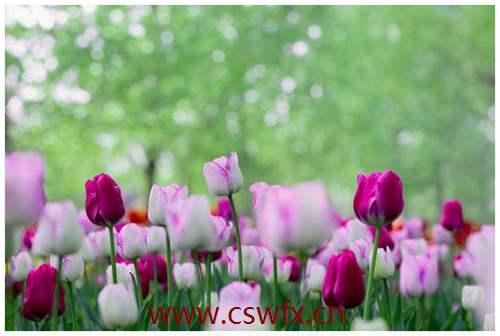 描写春天的美景的优美句子 句子大全 第3张