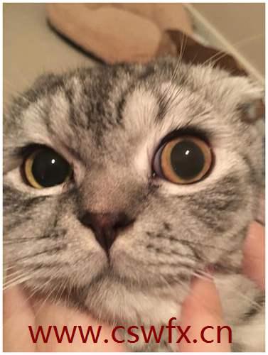 描写猫的眼睛的句子 句子大全 第3张