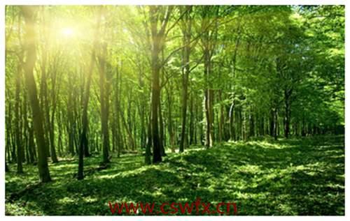描写树林景色的句子 句子大全 第3张